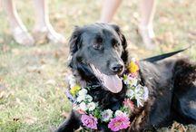 Pets / by H.Bloom Weddings
