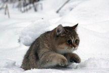 So Cute! / by Kelly Stevens