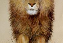 moms lion
