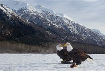 Alaska / by Jean Bailey