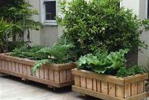 CF Barn Terraces/Gardens