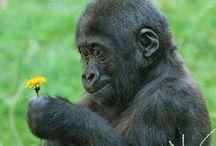 """Animais / """"Podemos julgar o coração de um homem pela forma como ele trata os animais."""" (Immanuel Kant)"""