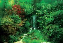 Su / All about water creatures.Tanks water gardens tropical fish and many more...