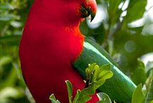 Parrots and other birds