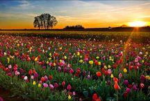 Beautiful! / by Gayle Wiese