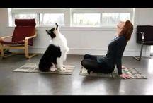 Videos con mascotas