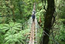 New Zealand / Travel ideas for visiting New Zealand.