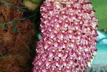 Orquídeas para comprar