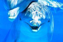 Images des fonds marins