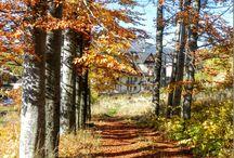 JESIEŃ / Jesienne klimaty w Tatrach.