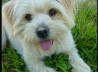 doggies...love my max & halle