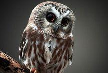 Owls / о совах