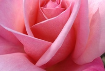 La vie en rose / by Marinela Carniato