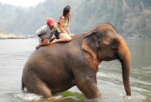 Thailand / All things Thailand. From enjoying a delicious meal at your favorite Thai place, to riding on the back of an elephant. Thailand is breathtaking! Start your Thailand adventure with us! / by STA Travel
