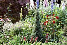Garden @ gardening