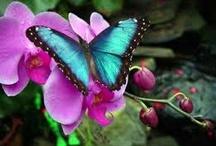 Butterflys & Moths / by Janice Johns