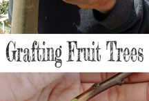 Fruit treesDrating