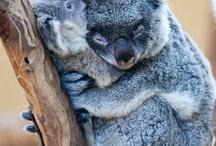 Aussie mates