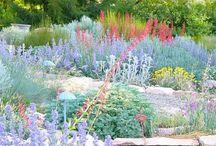 Xeriscape Gardens / Landscape Design