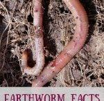 Earthworm facts