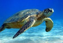 Beach turtles :-D / by Terri Garcia