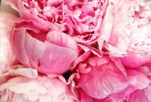 Passionate about Pinks