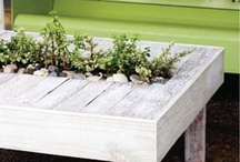 Yard and Garden / Enjoy and make use of your outdoor space with these yard and garden ideas! / by Celebrations.com
