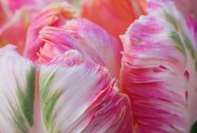 Poseys, Petals, and pretties / by Maria Robertson