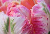 Bouguet of Flowers / Beautiful flower arrangements