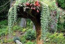 Stumpery garden