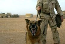 Militaries and their dogs