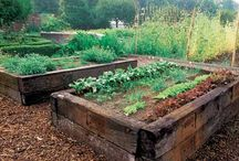 outside ideas / backyard | outdoors | outside | diy outside | gardening | garden boxes