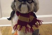 Harry Potter / by Katey Howard