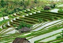 Bali in love