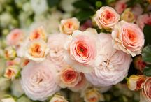 Eufloria Flowers- Romantic Garden Roses & Cluster Spray Roses! / J visits Eufloria Flowers and talks with Chad and Andy about their New Romantic Garden Roses… as well as their New Varieties of Spray Roses and Cluster Spray Roses… Eufloria's attention to Trends, Colors and Romantic Wedding Style continues to showcase their dedication to growing the Prettiest Roses on the Planet!   For More Information about Eufloria Flowers visit www.eufloriaflowers.com   / by J Schwanke