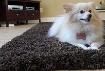 Love your friend! Love your floor! / You knows Pets. We know Floors! Free Estimates - Visit us online @ www.issishome.com