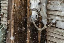 Koniaszcze