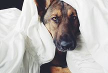 Dog / 家で犬と生活はできないので、せめてここでハンサムな犬を集めたいと思います。
