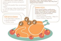 Thanksgiving / Our best tips for a healthy Thanksgiving / by Healthy Child Healthy World