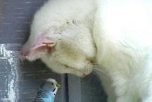 animals (domesticated) pets