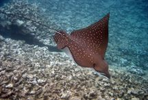 Diving Deep / Cool Scuba Diving Pics and Stuff