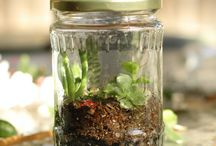 Terrariums & Closed Ecosystems / by Nancie Richard