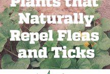 ticks and fleas repel plants