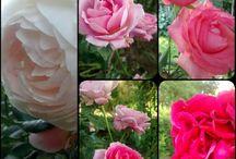 Flores y muchos colores