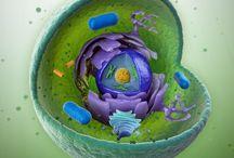 Medicine & Biology
