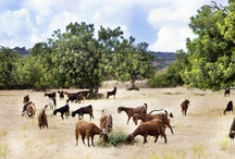Feel Cyprus - Landscapes