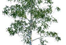 arbres objets