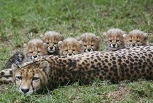 söta djur
