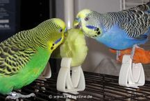 Our Suburban Farmyard / Pet care for dogs, guinea pigs, hermit crabs and budgies / by Carrie Hatchett