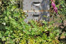 Garden: Pollinators & Other Beneficials / Pollinators: bees, bats, birds, people, mammals and more